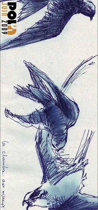 flyclaire1.jpg
